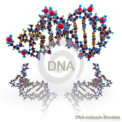 Molecule structure of DNA