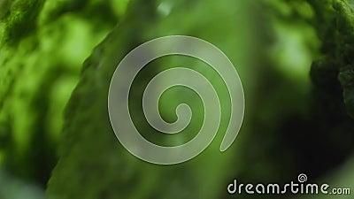 Molho de mistura do pesto no macro do close-up do movimento lento vídeos de arquivo