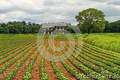 Molly Pitcher Farm