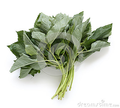 Molokhia, egyptian spinach