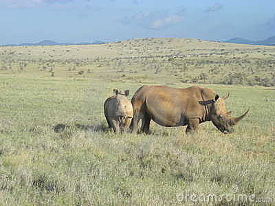 Mommy and baby rhino.