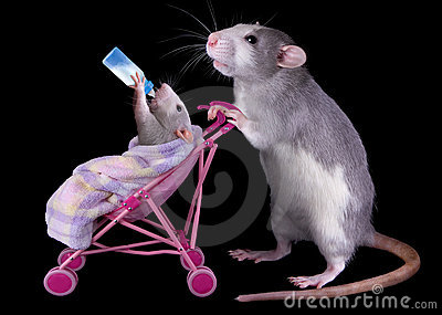 Mommy rat with baby