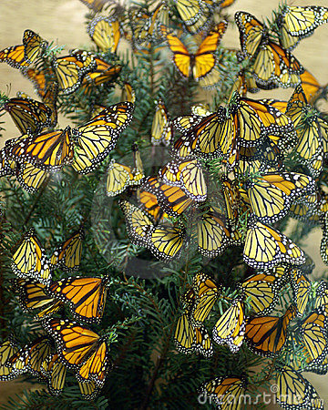 Monarch Butterflies Diorama