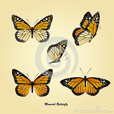 Free Monarch Butterfly Royalty Free Stock Image - 27258466