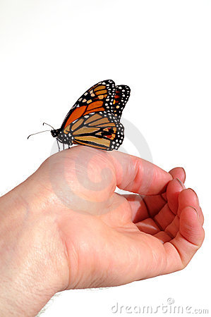 Monarch Butterfly Stock Images - Image: 9396004