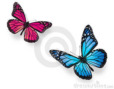 Monarch Butterfly Blue and Pink