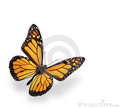 Free Monarch Butterfly Isolated On White With Shadow Royalty Free Stock Photo - 12364445