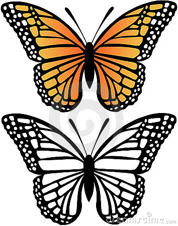 Monarch Butterfly Vector Illustration