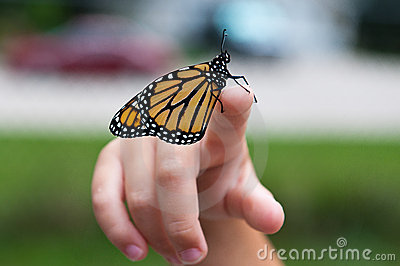 Monarch on Finger