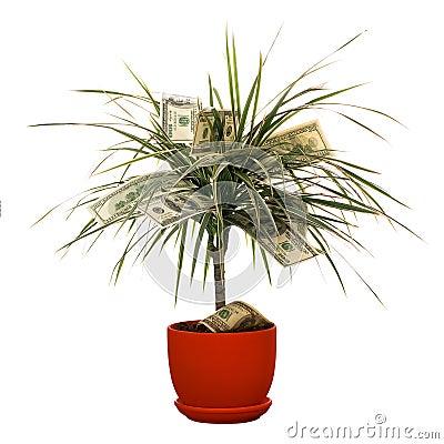 Monetary bush