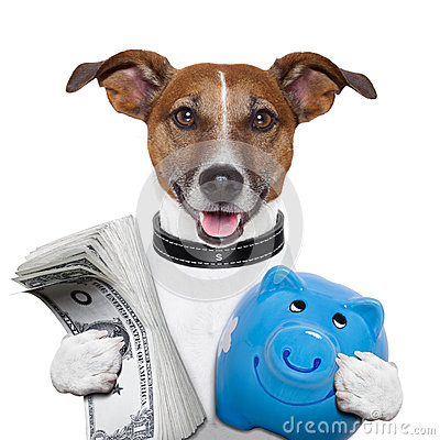 Free Money Dog Stock Image - 28155261