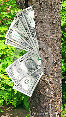 Money dollars tree