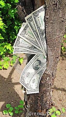 Money dollars tree