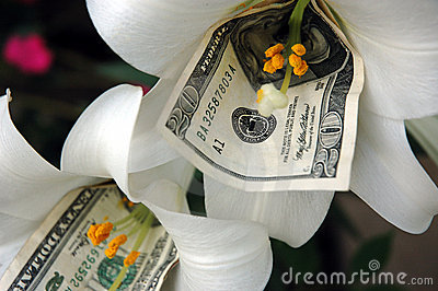 Money and flower 2