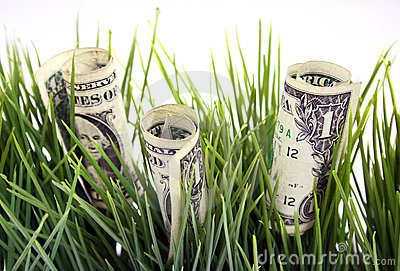 Money in the green grass