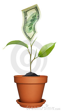 Money growing on plant