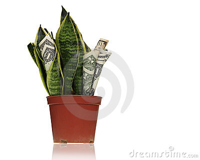 Money maker plant