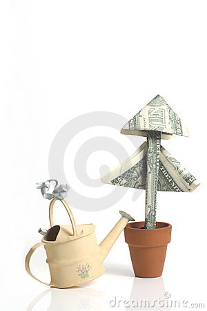 Money Plant and watering can