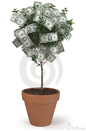 Free Money Tree Stock Photo - 1143230