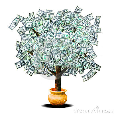 Free Money Tree Stock Photo - 13719610