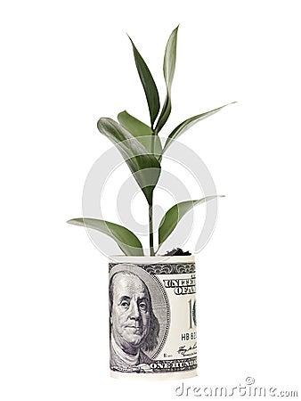 Free Money Tree Royalty Free Stock Image - 13955956