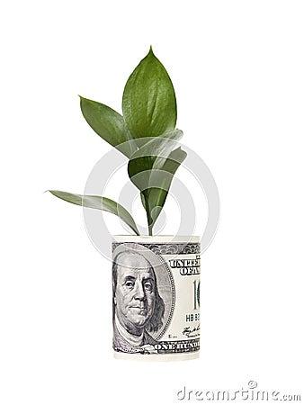 Free Money Tree Stock Photography - 13955982