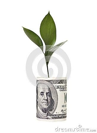 Free Money Tree Royalty Free Stock Photography - 13955987