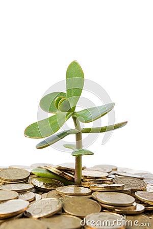 Free Money Tree Stock Photos - 16230333