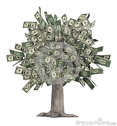 Free Money Tree Stock Photo - 2082610