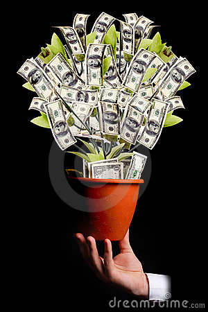Free Money Tree Royalty Free Stock Image - 2381626