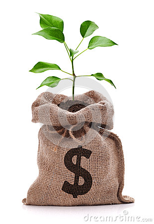 Free Money Tree Stock Photo - 33083150