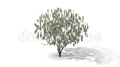 Money Tree animation stock video