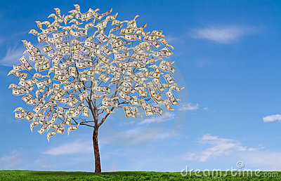 Money tree on blue sky, and grassy feild