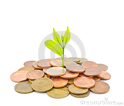 Money Tree growing from a pile of coins.