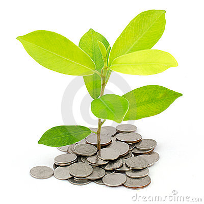 Money Tree on a pile of coins