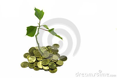 Money tree stock photo image 58457846 - Successful flower growing business ...