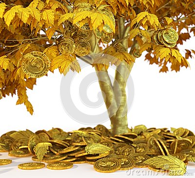 Free Money Tree With Coin S On Isolate White Background Close Up Stock Image - 72957371