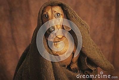 A monge