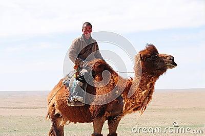 Mongolain nomadic herdsman on his camel Editorial Photography