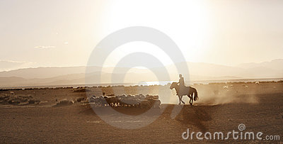 Mongolian boy drove herd of sheeps