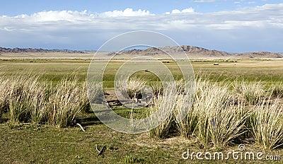 Mongolian Grasslands