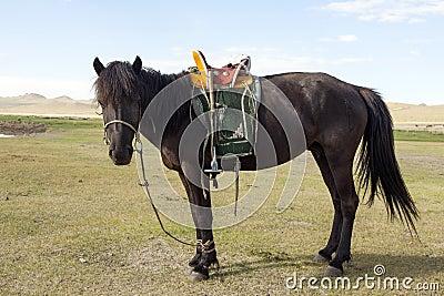 Mongolian Horse with Saddle