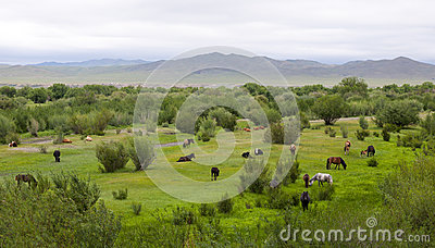 Mongolian Landscape with Horses