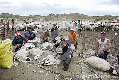 Mongolian Shephards Sheering Sheep Editorial Stock Image