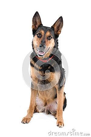 Free Mongrel Dog Stock Photos - 14127693