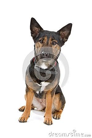 Free Mongrel Dog Royalty Free Stock Images - 14128009