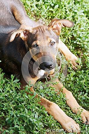 Free Mongrel Dog Royalty Free Stock Photo - 6263375