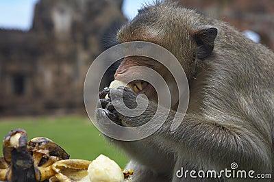 monkey-28