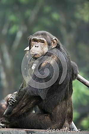 Free Monkey Stock Image - 342811