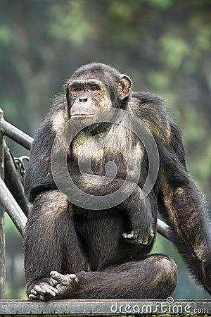 Free Monkey Stock Photos - 342813